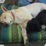 Dogs Post Massage
