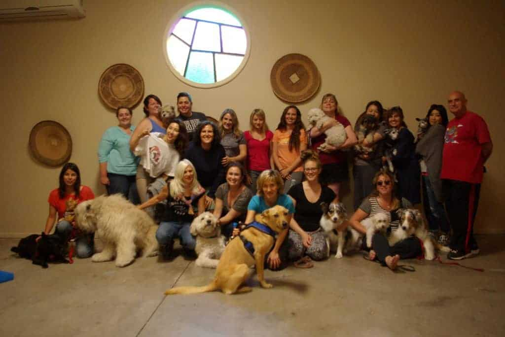 about osocm - ojai school of canine massage